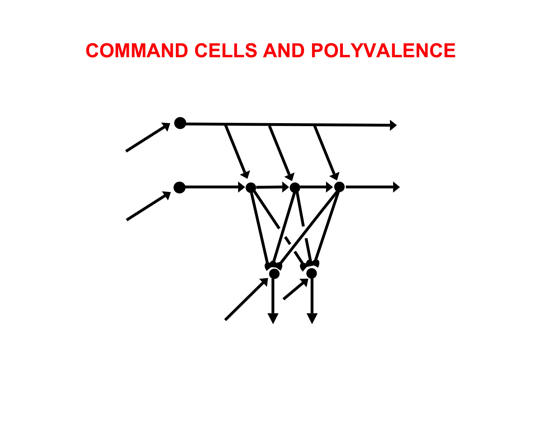 File:Rnn-command-cells.png