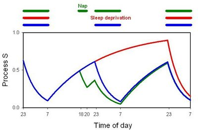 400px-Sleep_Homeostasis_fig1.jpg